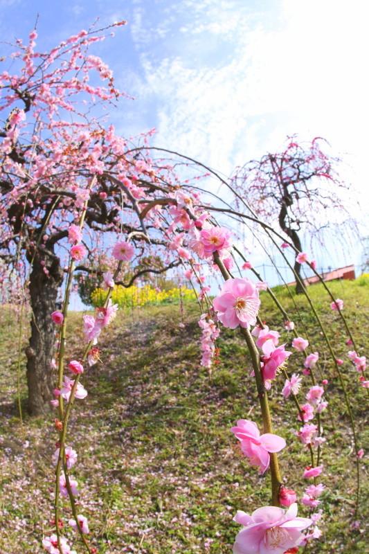 名古屋市農業センターdelaふぁーむ_f0367980_18312960.jpg