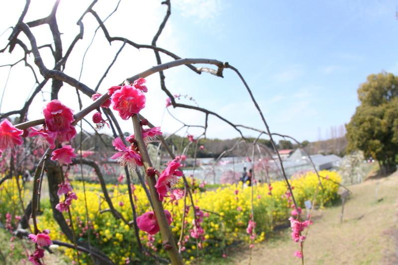名古屋市農業センターdelaふぁーむ_f0367980_18314796.jpg