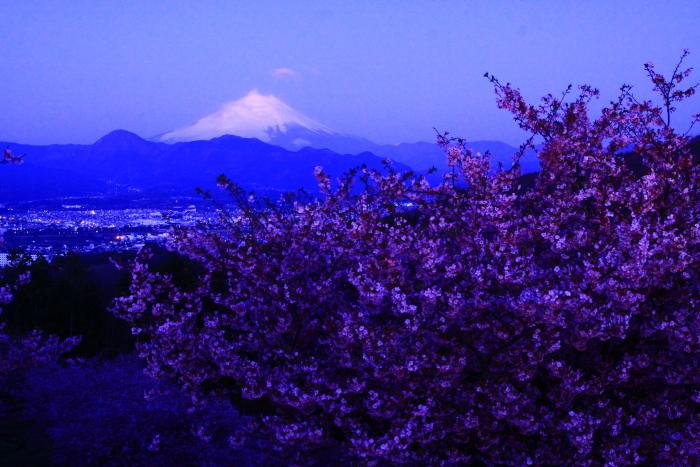 令和2年2月の富士 (22) おおいゆめの里の夜明けの富士_e0344396_12350501.jpg