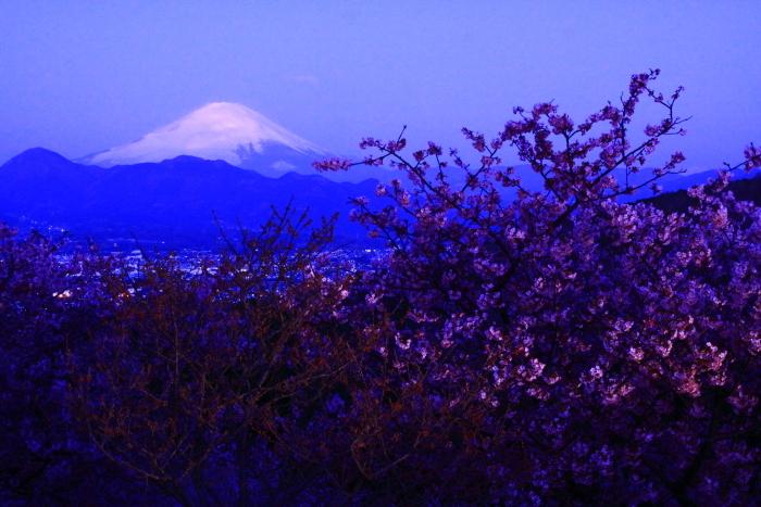 令和2年2月の富士 (22) おおいゆめの里の夜明けの富士_e0344396_12350615.jpg