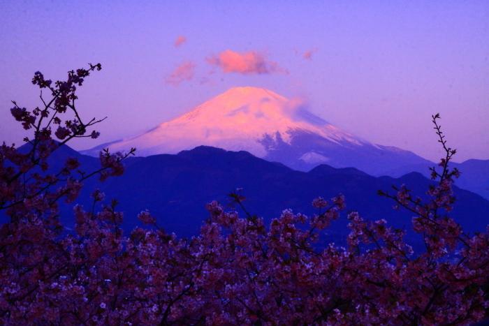 令和2年2月の富士 (22) おおいゆめの里の夜明けの富士_e0344396_12350693.jpg