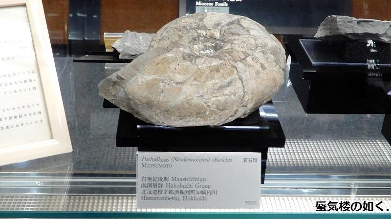「恋する小惑星」舞台探訪004-1/3 第4話 つくば駅周辺、そして地質標本館へ_e0304702_18571393.jpg