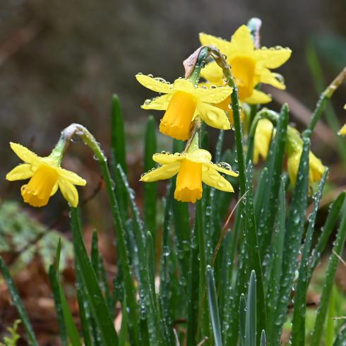 もうすぐ春が 04_f0099102_12054282.jpg