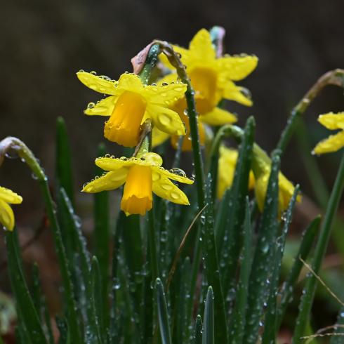 もうすぐ春が 04_f0099102_12054970.jpg