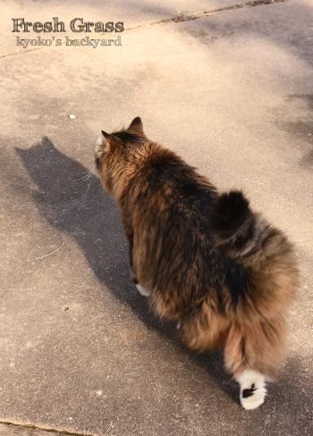 猫が喜ぶ季節の到来_b0253205_11101779.jpg