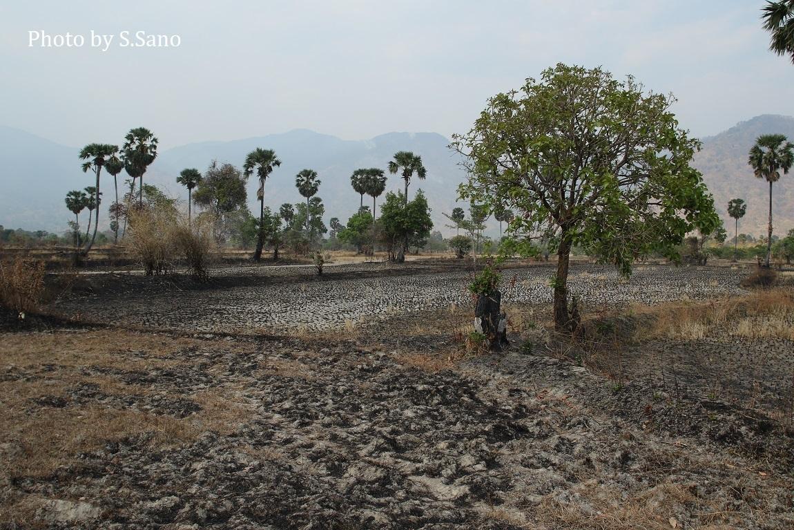 カンボジアの旅(2020年2月)~その2~_b0348205_23170464.jpg