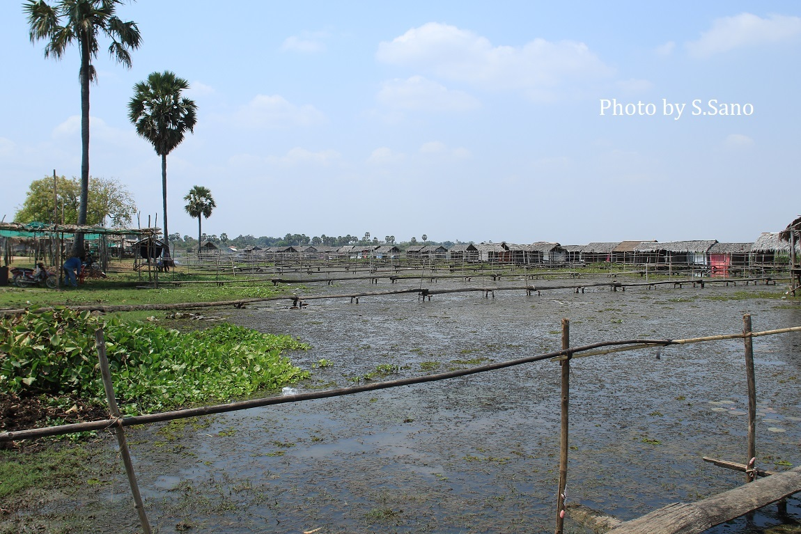 カンボジアの旅(2020年2月)~その3~_b0348205_23212096.jpg