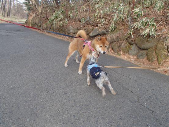 午後散歩コースを_f0064906_15265621.jpg