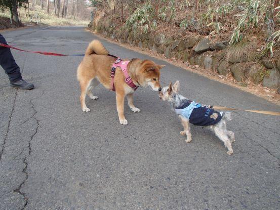 午後散歩コースを_f0064906_15265975.jpg