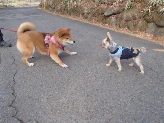 午後散歩コースを_f0064906_15270398.jpg