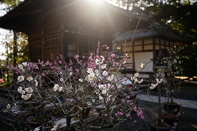 春の花咲く山@石山寺_f0032011_21012906.jpg