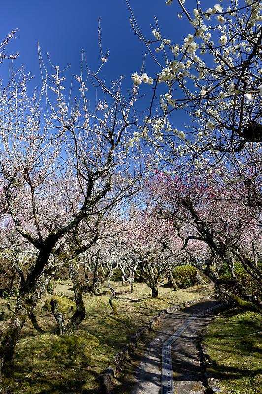 春の花咲く山@石山寺_f0032011_21013016.jpg