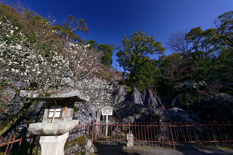 春の花咲く山@石山寺_f0032011_21013020.jpg