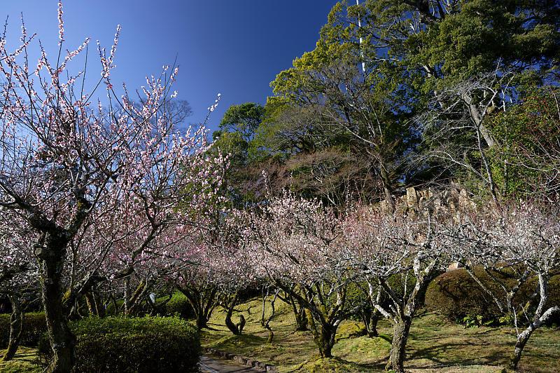 春の花咲く山@石山寺_f0032011_21013026.jpg