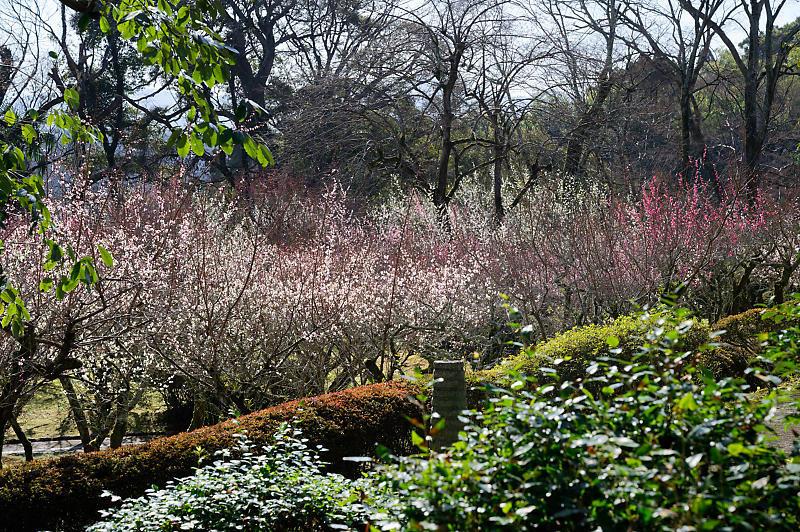 春の花咲く山@石山寺_f0032011_21013049.jpg