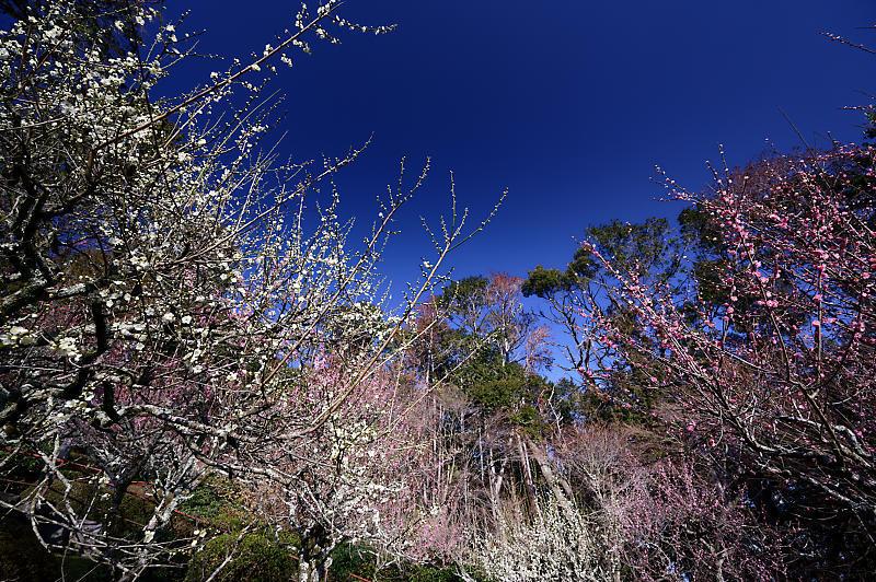 春の花咲く山@石山寺_f0032011_21013078.jpg