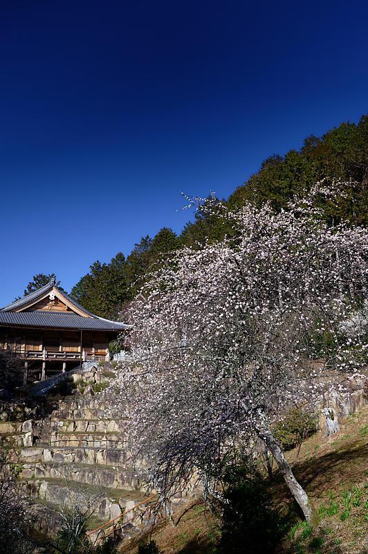 春の花咲く山@石山寺_f0032011_21013081.jpg