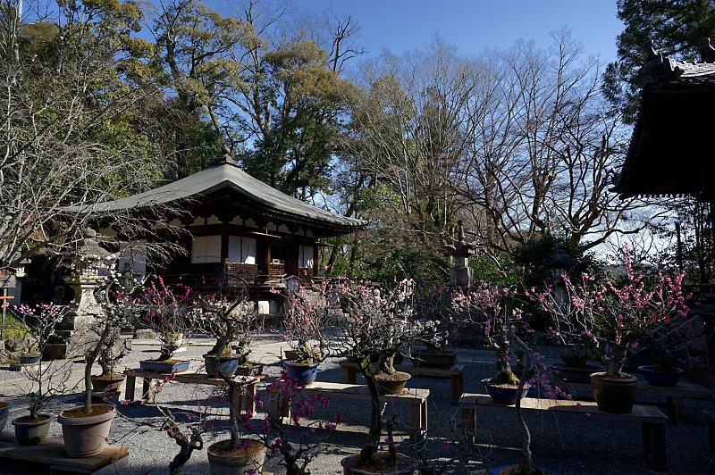 春の花咲く山@石山寺_f0032011_21013159.jpg