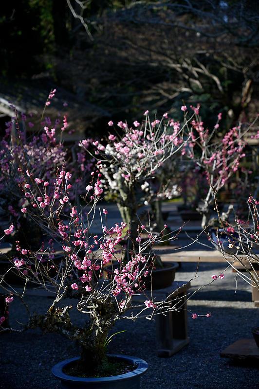 春の花咲く山@石山寺_f0032011_21013195.jpg