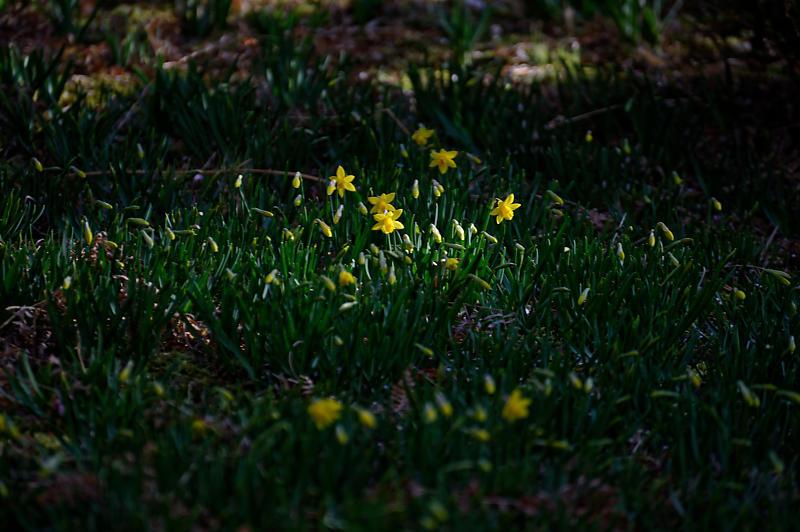 春の花咲く山@石山寺_f0032011_21140021.jpg