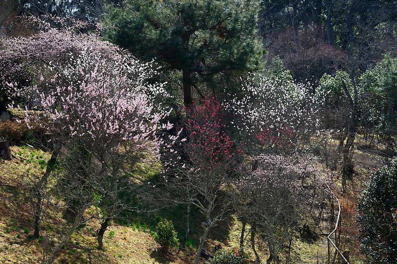 春の花咲く山@石山寺_f0032011_21140065.jpg