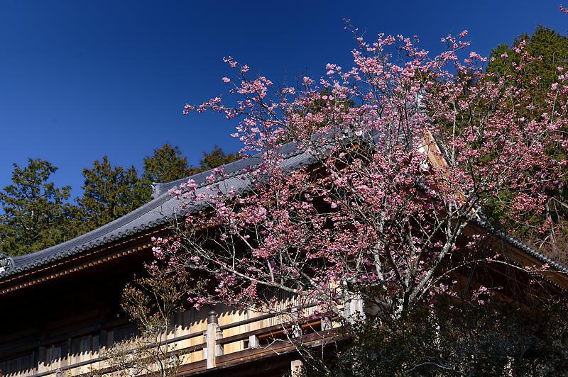 春の花咲く山@石山寺_f0032011_21171518.jpg