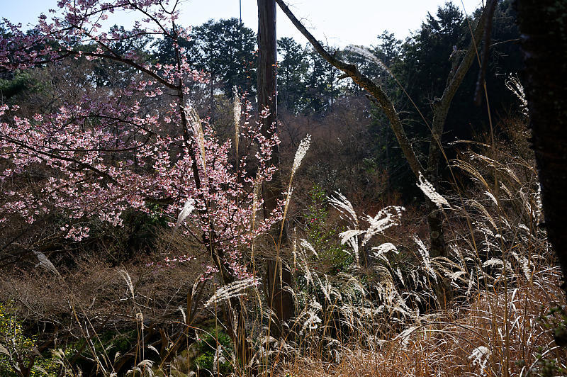 春の花咲く山@石山寺_f0032011_21171592.jpg