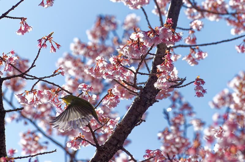 春の花咲く山@石山寺_f0032011_21171612.jpg