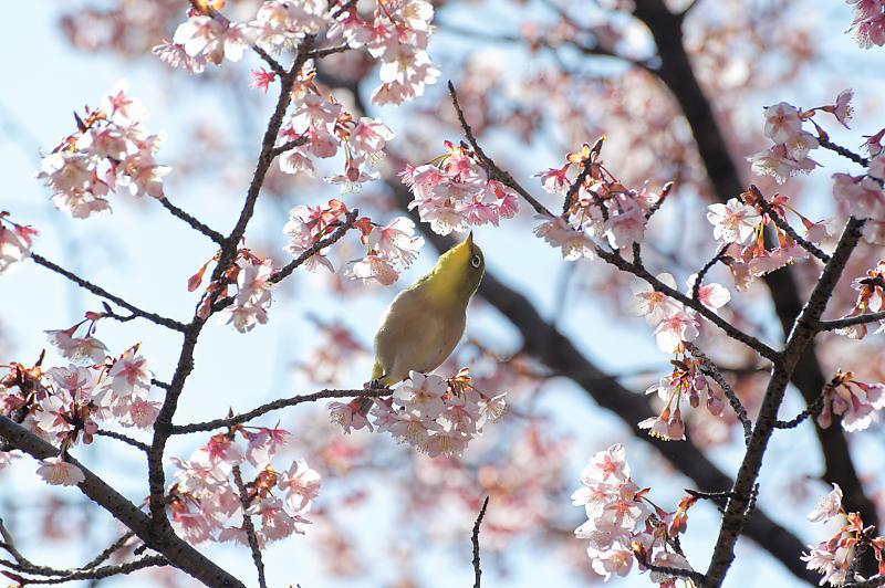 春の花咲く山@石山寺_f0032011_21171671.jpg