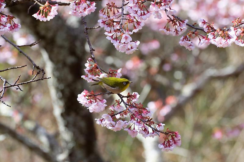 春の花咲く山@石山寺_f0032011_21171673.jpg