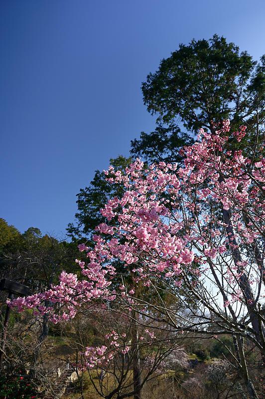 春の花咲く山@石山寺_f0032011_21194327.jpg
