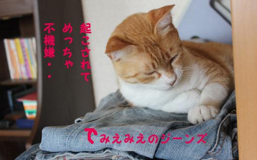 おいなりちゃん劇場_a0329820_06015089.jpg