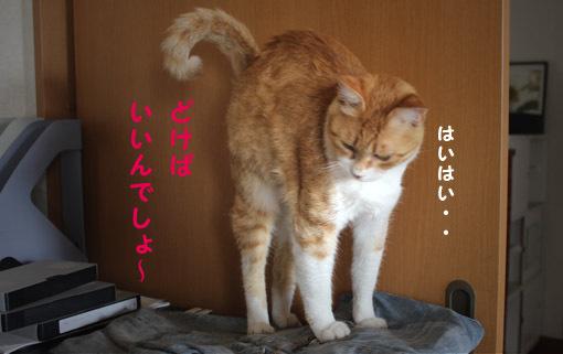 おいなりちゃん劇場_a0329820_06015469.jpg