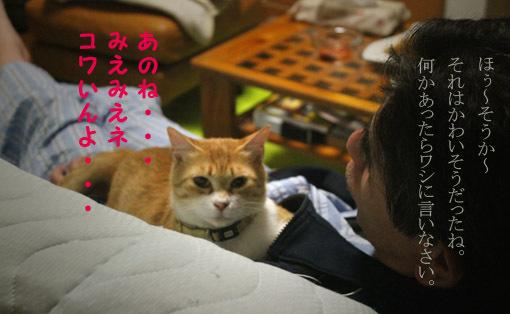 おいなりちゃん劇場_a0329820_06015620.jpg