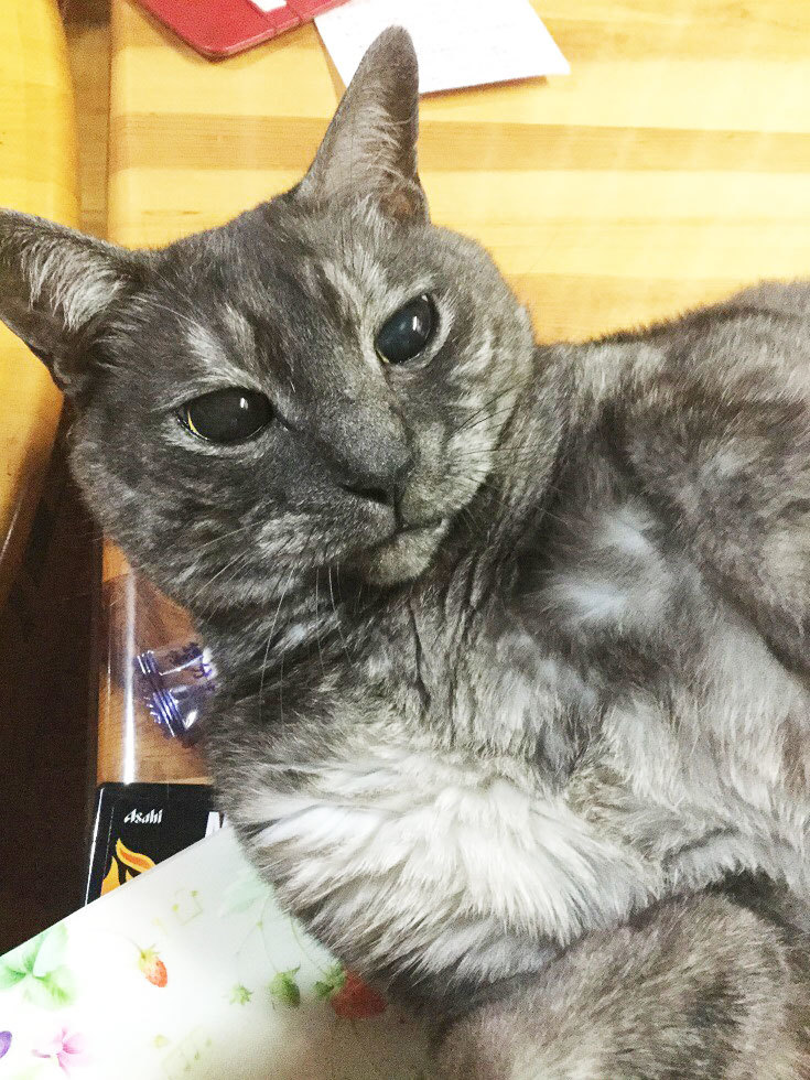 猫の日。今年もおめでとう^^_a0021523_14033226.jpg