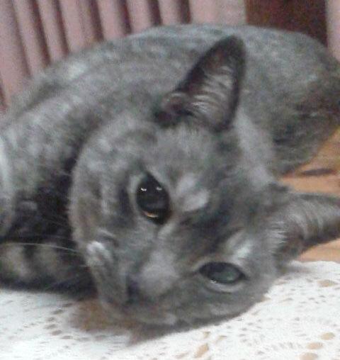 猫の日。今年もおめでとう^^_a0021523_14033308.jpg
