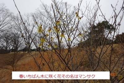 春まだ早いハイキング(県民の森)_e0265627_13274699.jpg