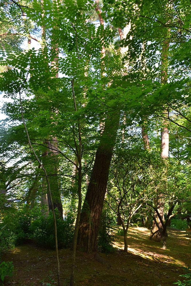丹波亀山城を歩く。 その1 <大本・天恩郷>_e0158128_19433769.jpg
