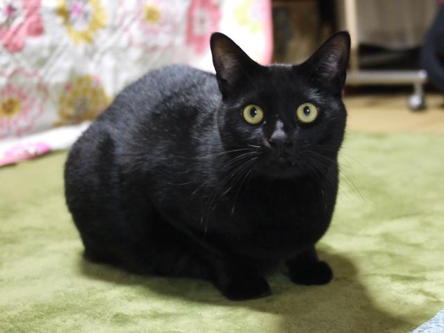 猫のお留守番 レオくん編。_a0143140_21540007.jpg