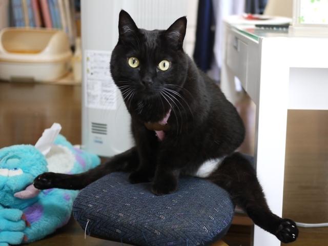 猫のお留守番 ヤマトくん編。_a0143140_22093583.jpg