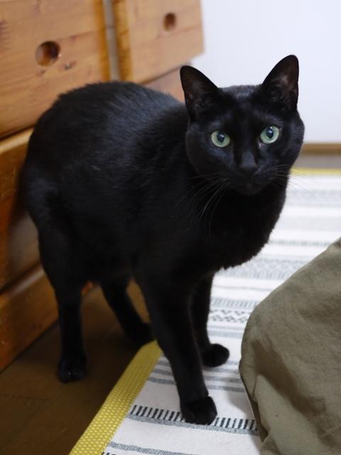 猫のお留守番 海くん編。_a0143140_22125927.jpg