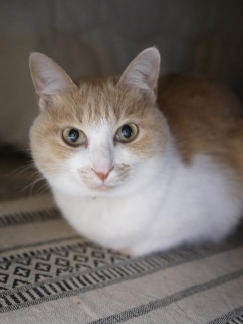 猫のお留守番 しゃくちゃん編。_a0143140_22281369.jpg