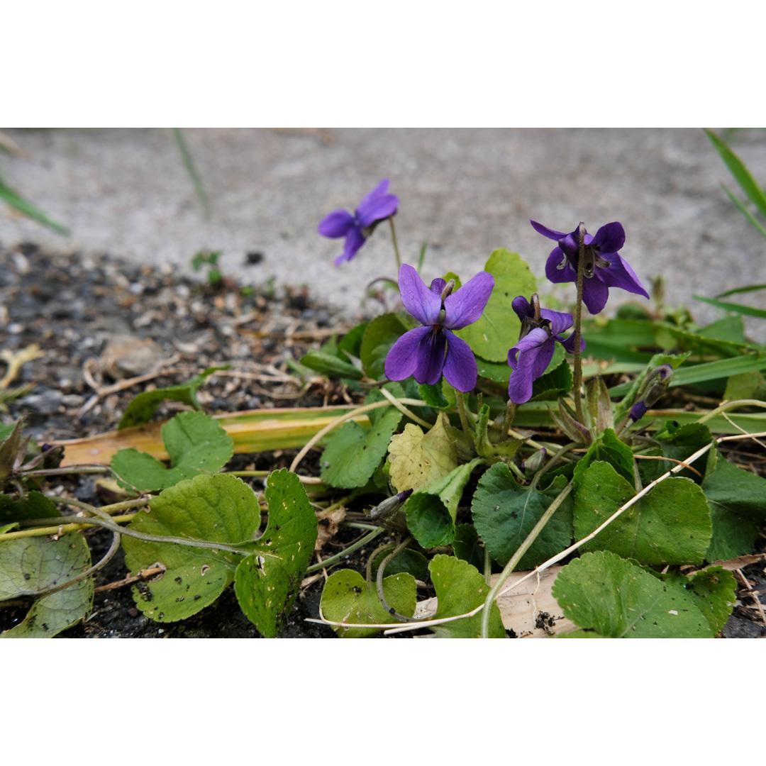 それでも、春が来たから。_d0227246_12550616.jpg