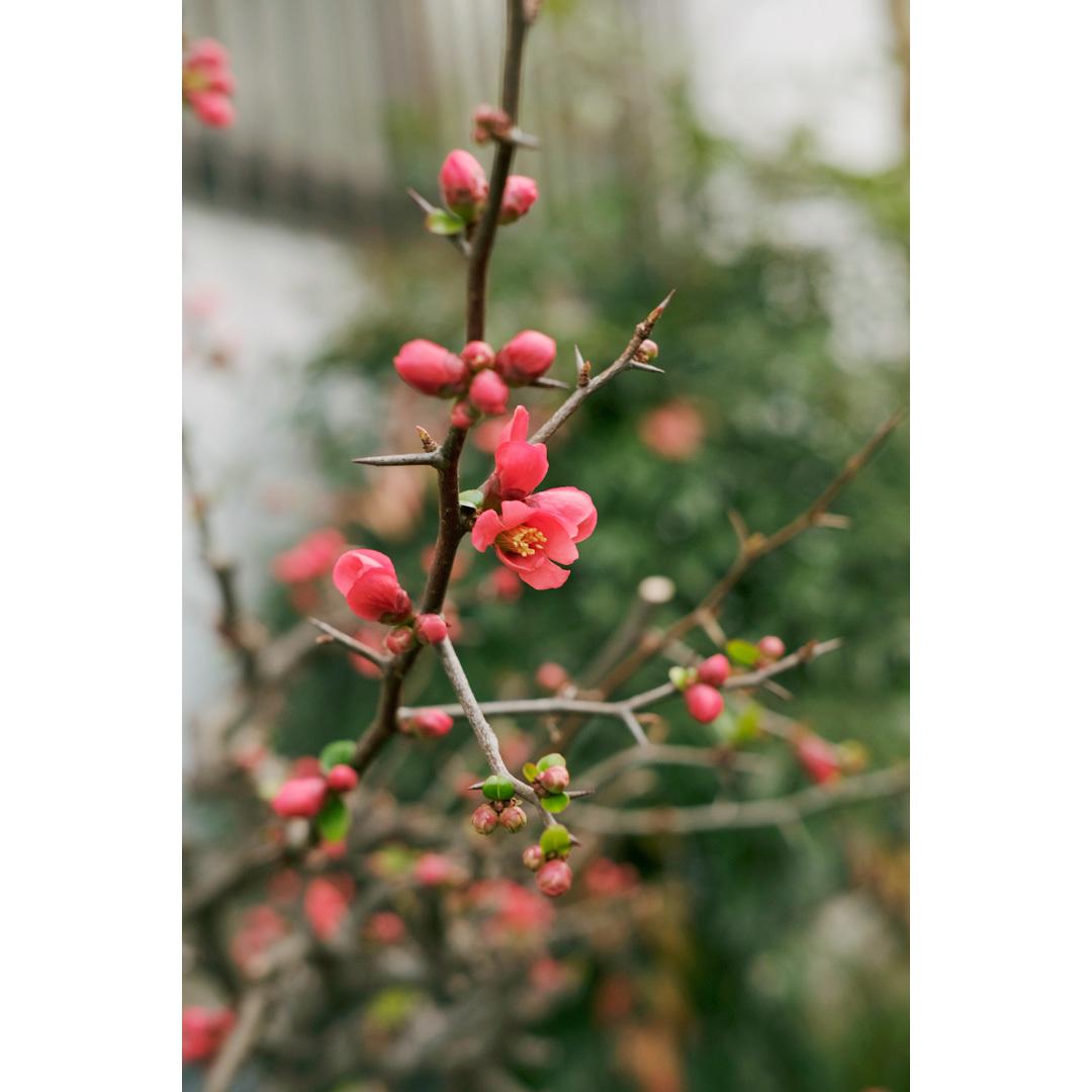 それでも、春が来たから。_d0227246_12550665.jpg