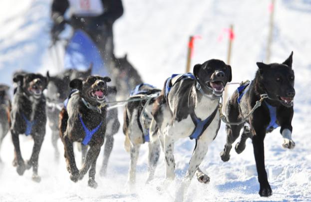 犬ぞりの短距離レース開幕!_b0135948_00575016.png