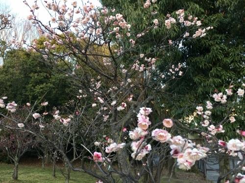 京都・奈良 冬の旅\'20 その1_e0326953_19190886.jpg