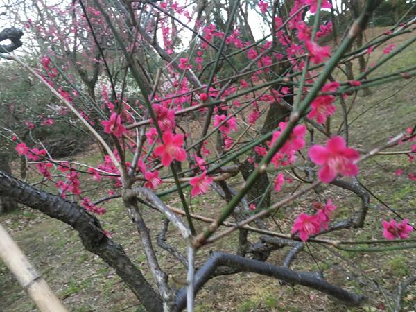 梅の香りがとっても良かったでしゅ♩〜_c0110361_14413181.jpg