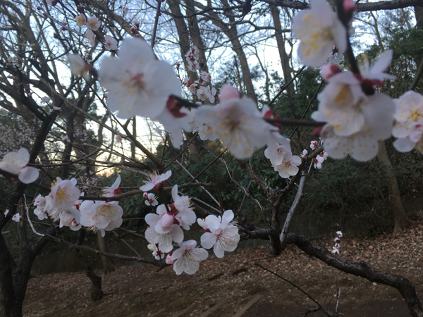 梅の香りがとっても良かったでしゅ♩〜_c0110361_14414321.jpg