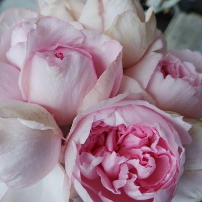 オークリーフ(今日のお店の花。明日の営業につきまして。)_f0049672_18225890.jpg