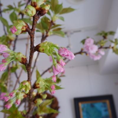 オークリーフ(今日のお店の花。明日の営業につきまして。)_f0049672_18234755.jpg